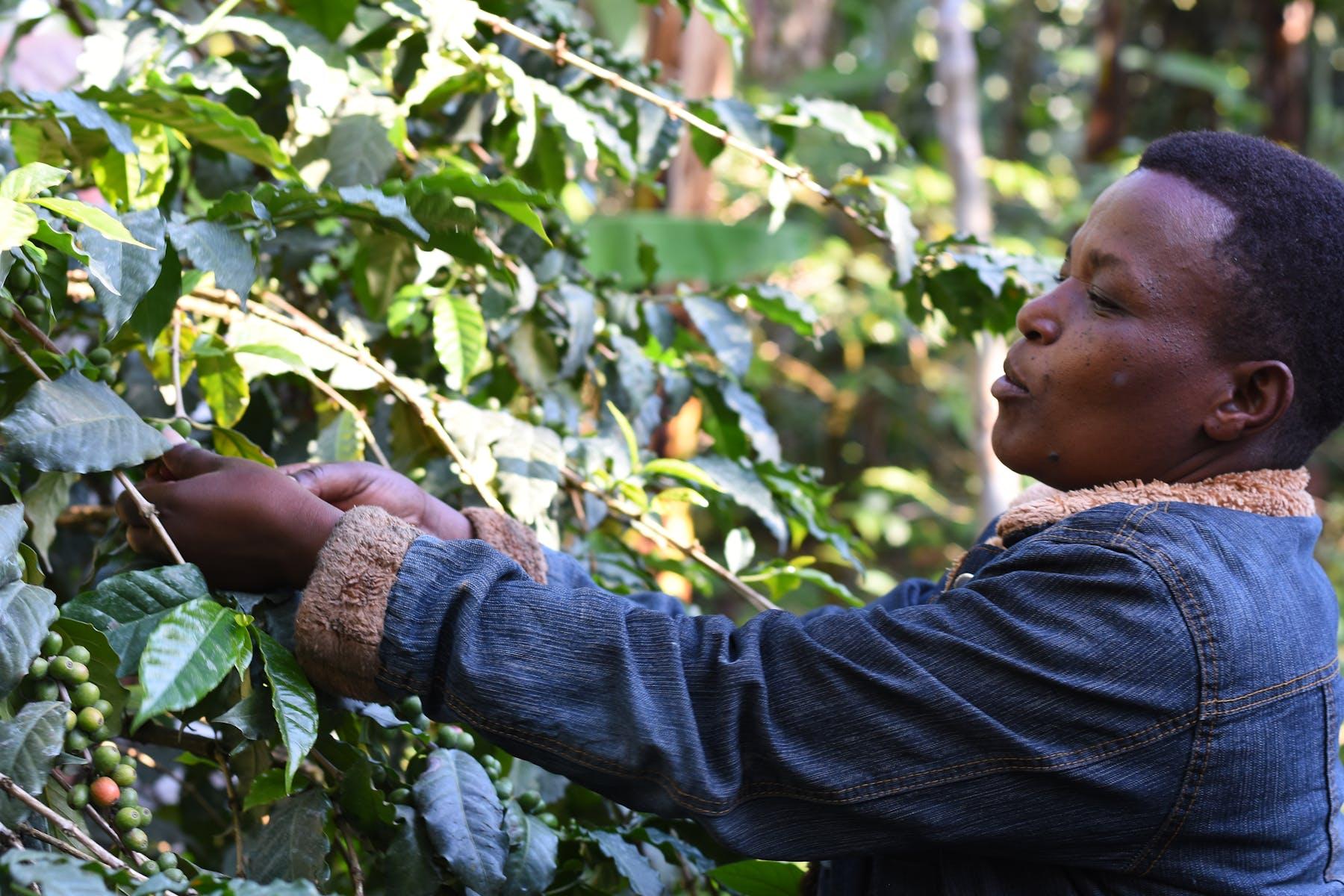 Bring a coat - Mwika is high up Kilimanjaro